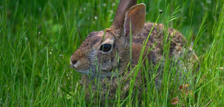 Growing Grass Indoors for Rabbits