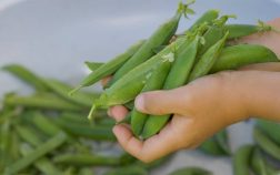 Growing Green Beans From Seed Indoors