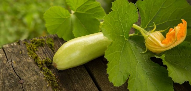 Growing Squash From Seeds Indoors