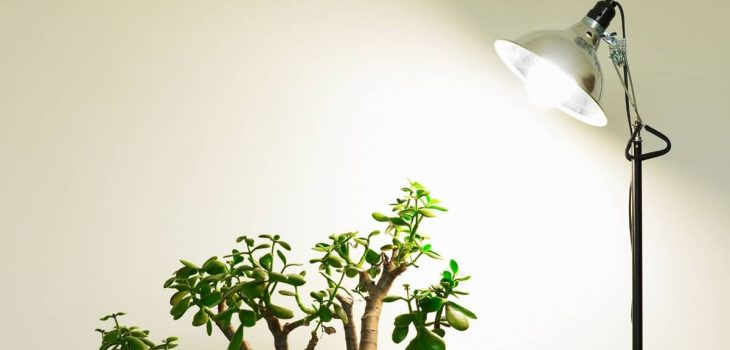 What are the Best Lights for Growing Plants Indoors