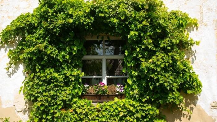grow vines indoors